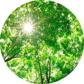 森林浴同様の癒しの効果